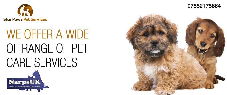 Star Paws Dog Walking and Home Pet Services